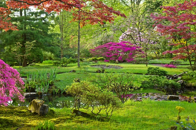 Японский сад весной, гаага, голландия