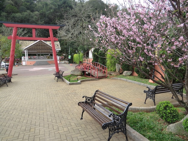 벚꽃과 벤치가 있는 일본 정원