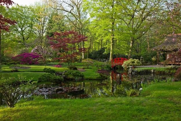 Japanese garden with red bridge in spring , den haag, holland