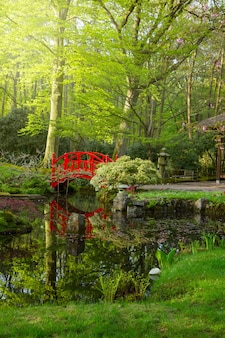 Japanese garden with red bridge at sunny day, den haag, holland