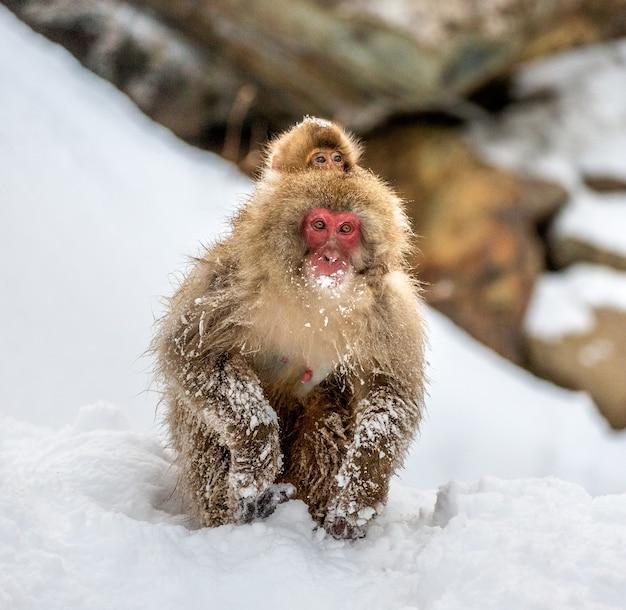 雪の中で座っているニホンザル