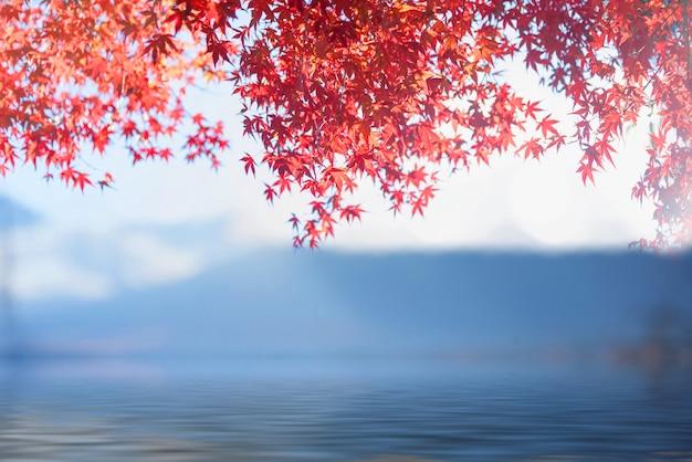 Японские кленовые листья