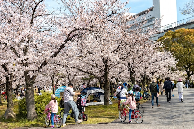 日光の下で日本の桃の木の花