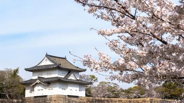 일본 복숭아 나무 꽃
