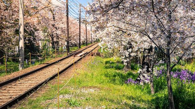 Японский пейзаж железнодорожных путей с цветущими вишневыми деревьями вдоль железной дороги в весенний сезон. железная дорога с фоном цветет сакура. транспорт для осмотра достопримечательностей японии концепт