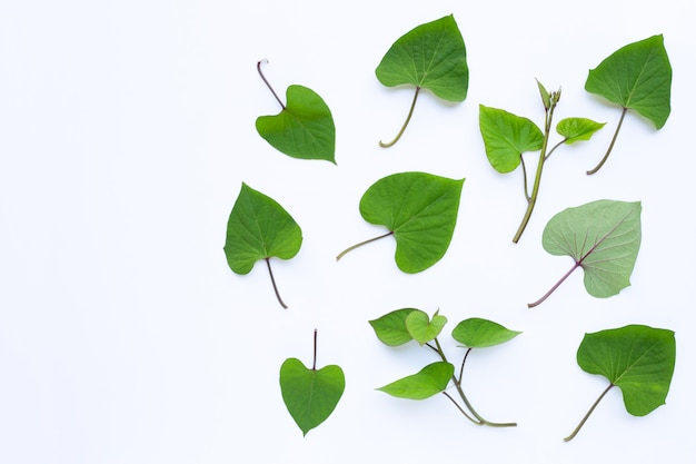 Japanese sweet potato leaves on white