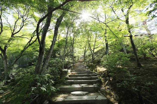 緑の庭の木々の日本の歩道