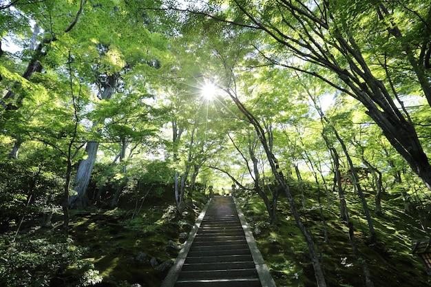 녹색 정원 나무의 일본 산책로
