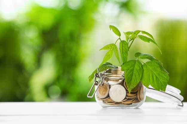 Jar with coins and growing plant on table. money savings concept