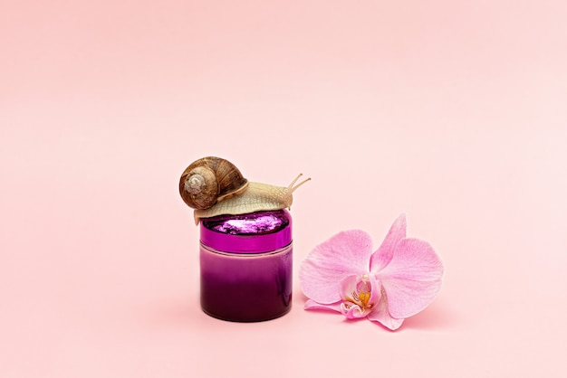 Jar with cosmetic cream for skin rejuvenation on a pink background with snail and orchid flower, snail mucin cream, skin hydration, beauty, health, spa concept. soft selective focus, copy space.