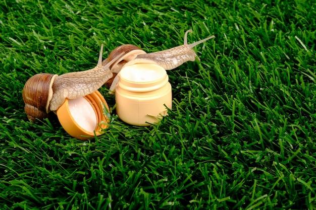 緑の芝生にカタツムリとクリームの瓶。美容、カタツムリムチンとボディケア化粧品。