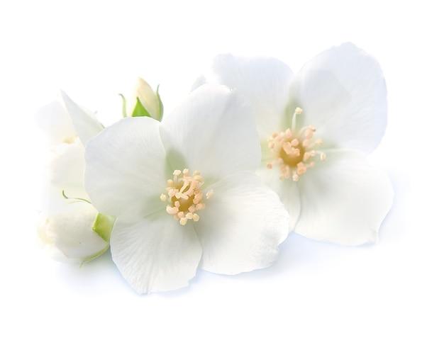 Жасмин цветы крупным планом