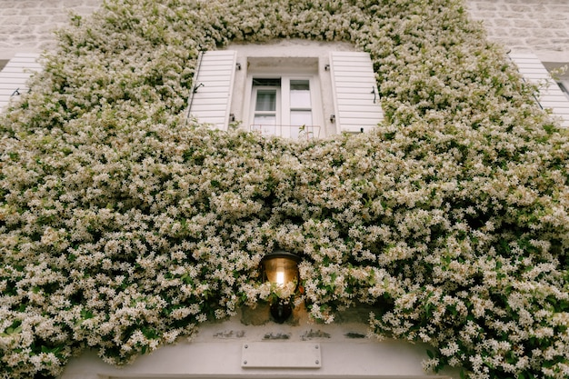 셔터가 열려 있고 가로등이 켜진 창문으로 벽을 웅크 리고있는 재스민.