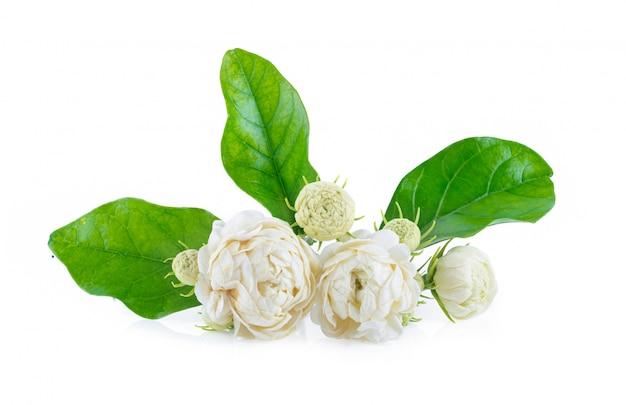 Цветок жасмина на белом столе.