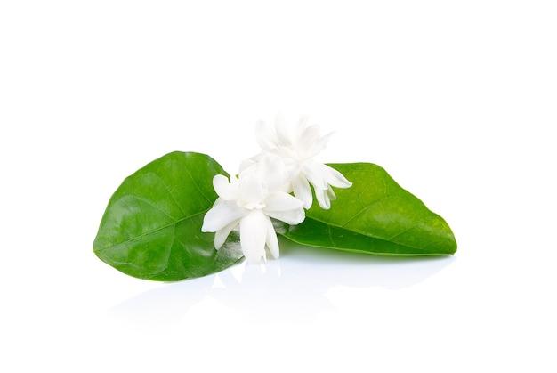 Цветок жасмина на белом