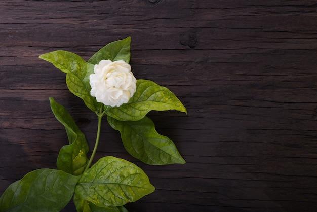 Жасмин цветочный символ дня матери в таиланде.