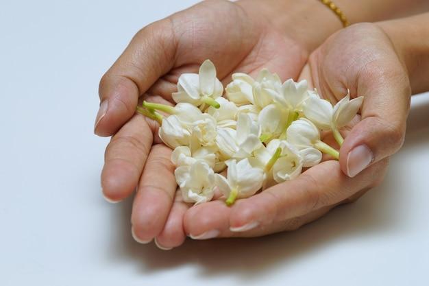 재스민 꽃, 태국 사람들은 태국어 어머니의 날에 어머니에게 재스민 꽃을 선물합니다.