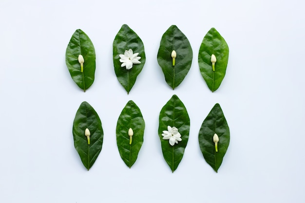 Jasmine flower with leaves on white background.