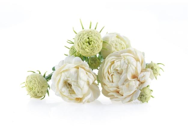 흰색 표면에 고립 된 재스민 꽃