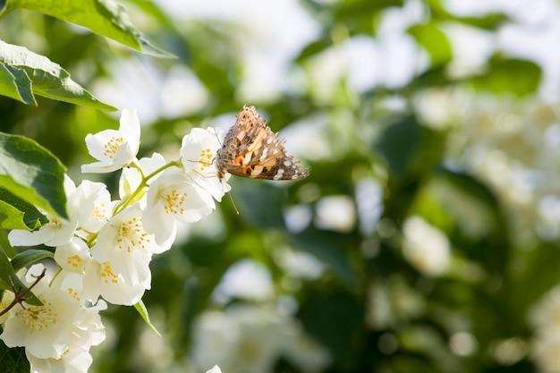 재스민 꽃