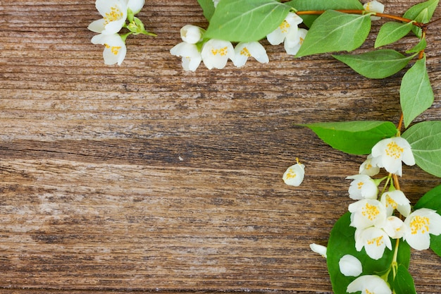 Jasmine fresh flowers and leaves on rusic wooden table