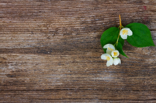 Jasmine fresh flowers and leaves twig on wooden table