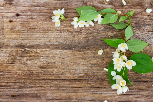 Jasmine fresh flowers and leaves on wooden table