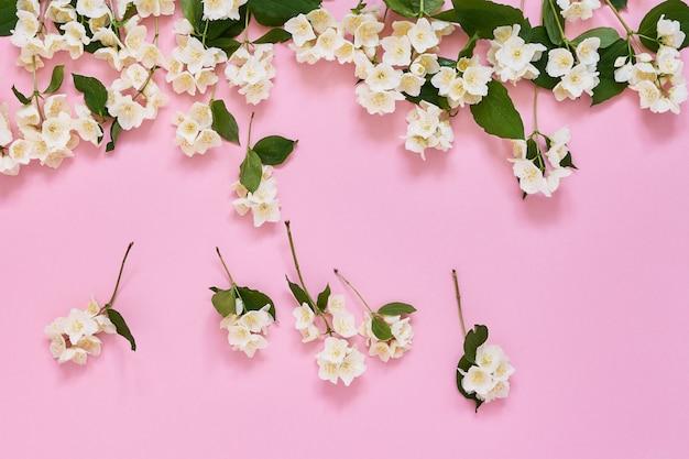 ジャスミン、フィラデルフス、またはモックオレンジの花がピンクに縁取られています