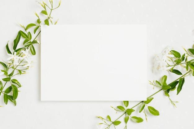白い背景の上のウェディングカードとjasminum auriculatum花小枝