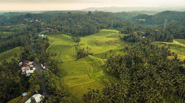 Вид на рисовые поля jatiluwih