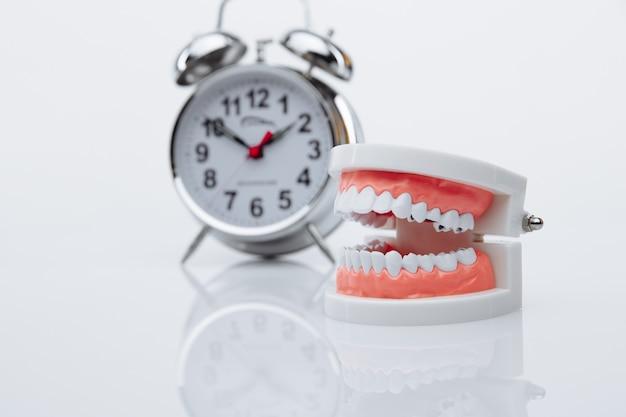 あごのモデルと目覚まし時計のクローズアップ。歯科医を訪ねる時間