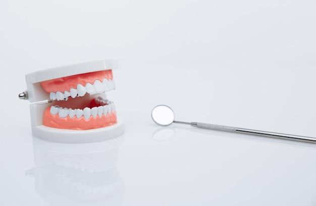Модель челюсти и инструмент стоматолога. концепция лечения зубов