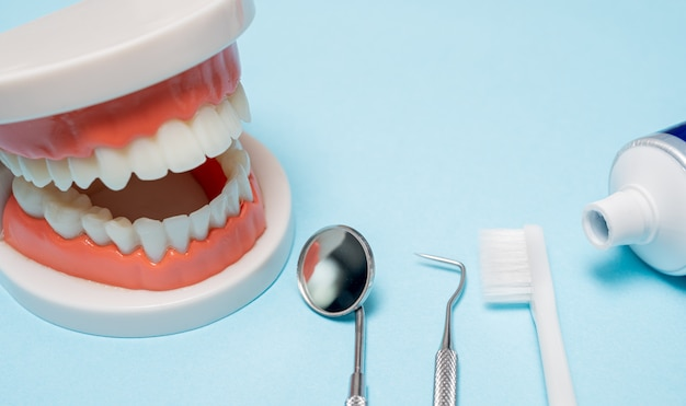 Jaw model with dental equipment on a blue background.