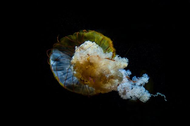 海の下のクラゲ