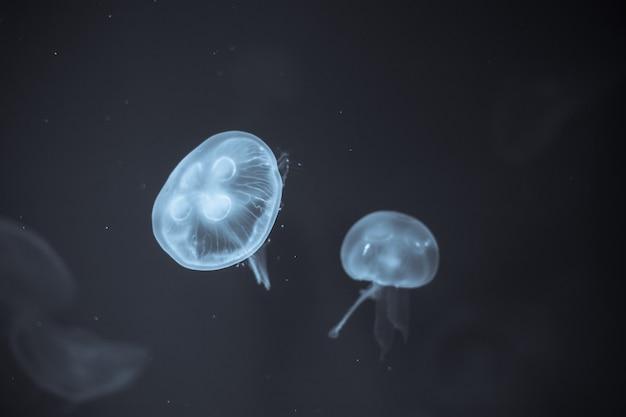Медузы, которые лежат под глубоким морем.