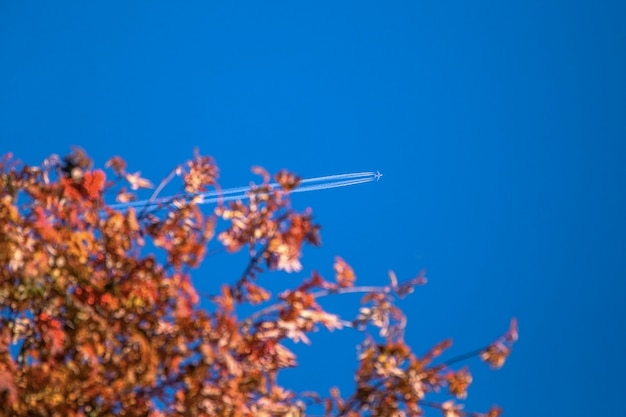 Jet plane flying overhead with condensation trail in the blue sky over autumn tree. Premium Photo