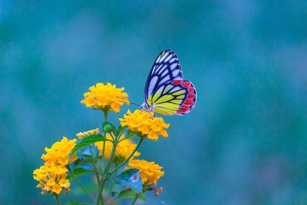 柔らかい緑の背景に花の植物のイザベル蝶またはdeliaseucharis