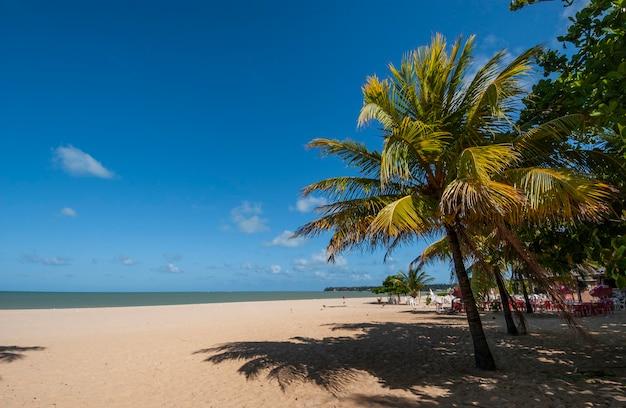 ジョアンペソアパライバブラジルカボブランコビーチのココナッツグローブ