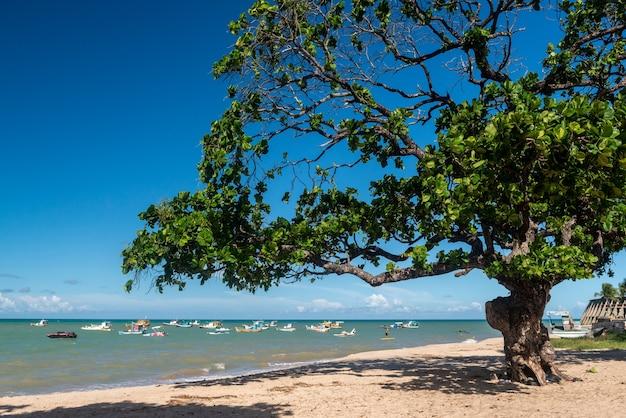 ジョアンペソアパライバブラジルタンバウビーチツリーとボート
