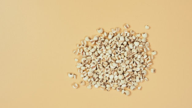 Job's tears, also known as adlay and coix on white background. popular in asian cultures as a food source.
