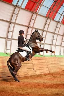 アリーナで馬に乗る騎手
