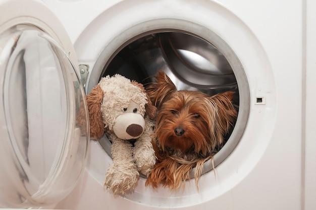 농담 그림, 세탁기에 장난감 강아지와 함께 장소에서 작은 개 씻기
