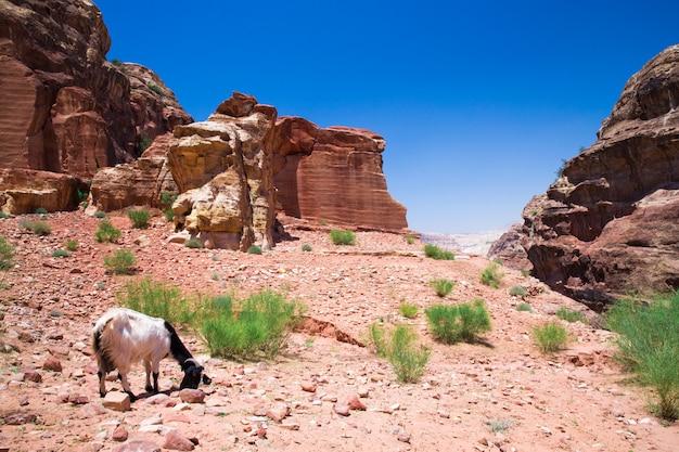 ペトラのヨルダンの砂漠