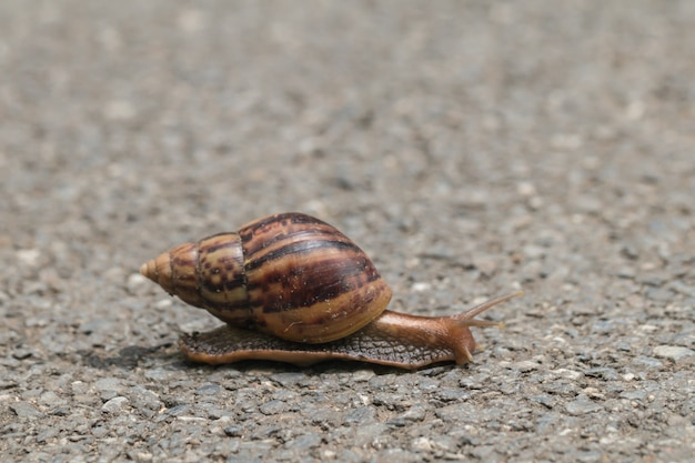 Journey of snail in the nature background