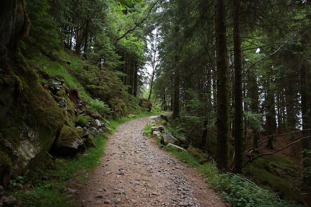 ノルウェーへの旅、きれいな場所でハイキングするための森の小道、上り坂。