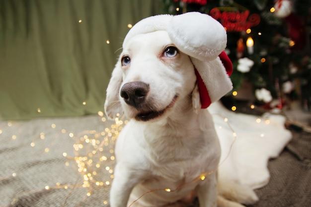 サンタクロースの帽子をかぶってクリスマスを祝う喜びの子犬犬。