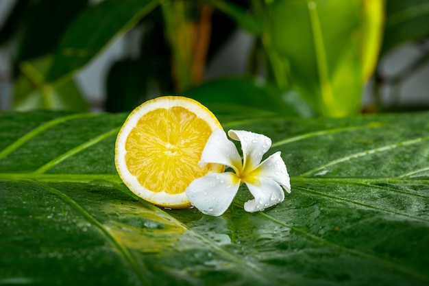 Juicy fresh lemon with plumeria flower on a green leaf. healthy lifestyle and spa concept