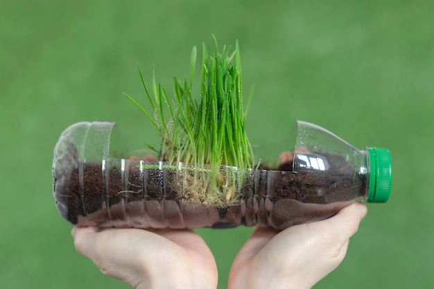 A juicy green grass in a bottle with earth in the hands of a woman. earth day.
