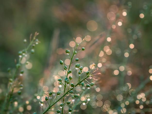 夏の屋外のクローズアップ、ソフトフォーカスの朝の光で水露の滴で牧草地にジューシーな緑の芝生。