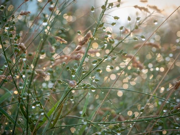 夏に水滴と牧草地のジューシーな緑の草